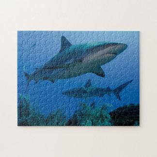 Caribbean Reef Shark Jardines de la Reina Puzzle
