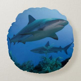 Caribbean Reef Shark Jardines de la Reina Round Pillow