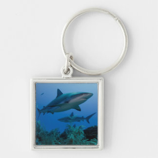 Caribbean Reef Shark Jardines de la Reina Silver-Colored Square Keychain