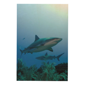 Caribbean Reef Shark Jardines de la Reina Wood Wall Art