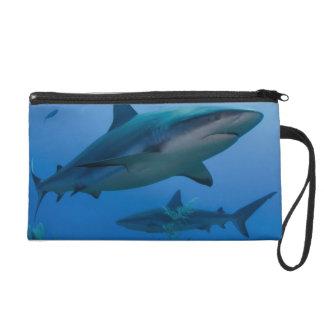 Caribbean Reef Shark Jardines de la Reina Wristlet
