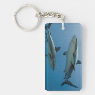 Caribbean Reef Shark Keychain