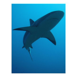 Caribbean Reef Shark Personalized Letterhead