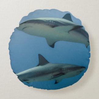 Caribbean Reef Shark Round Pillow