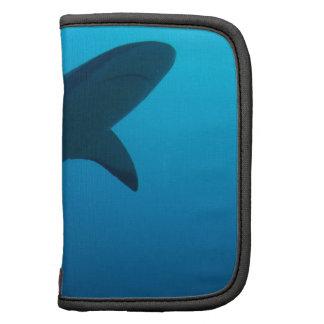 Caribbean Reef Shark Planner