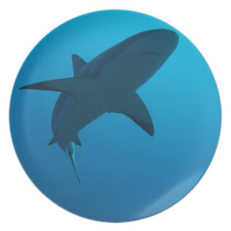 Caribbean Reef Shark Party Plate