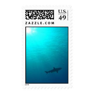 Caribbean reef shark postage stamp