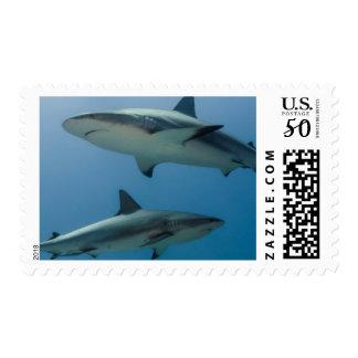 Caribbean Reef Shark Postage