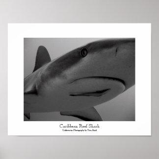 Caribbean Reef Shark Poster
