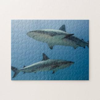 Caribbean Reef Shark Puzzle