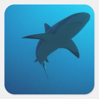 Caribbean Reef Shark Square Sticker