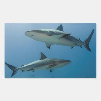 Caribbean Reef Shark Rectangle Sticker