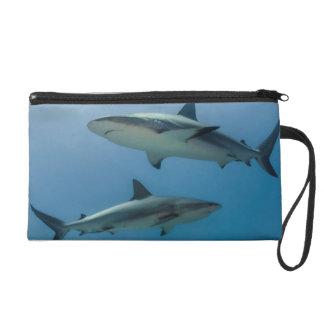 Caribbean Reef Shark Wristlet