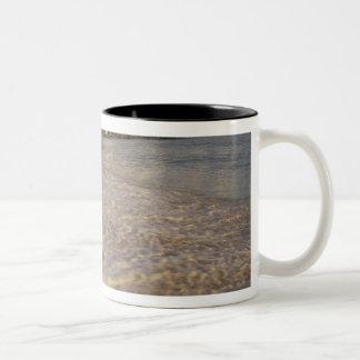 Caribbean, St. Martin (St. Maarten). Maho Bay Two-Tone Coffee Mug