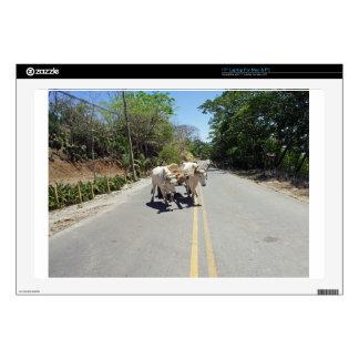 caribbean transportation laptop decals