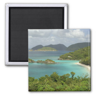 Caribbean, U.S. Virgin Islands, St. John, Trunk 2 Inch Square Magnet