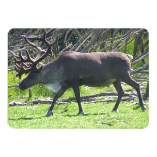 Caribou Against Twisty Branch Background Card