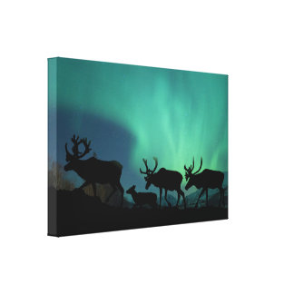 Caribou and Northern Lights Canvas Print