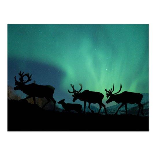 Caribou and Northern Lights Postcard