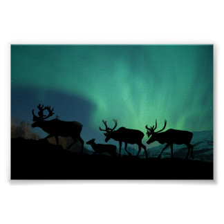 Caribou and Northern Lights Poster