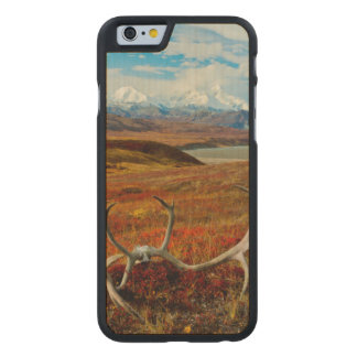 Caribou Antlers On The Alaskan Tundra Carved Maple iPhone 6 Slim Case
