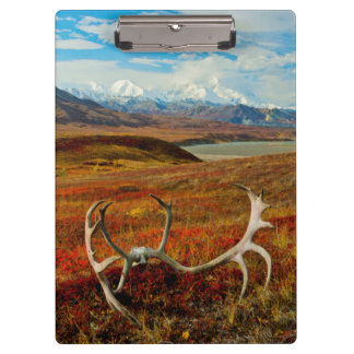 Caribou Antlers On The Alaskan Tundra Clipboards