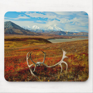 Caribou Antlers On The Alaskan Tundra Mouse Pad