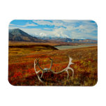 Caribou Antlers On The Alaskan Tundra Flexible Magnet