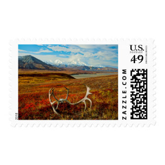 Caribou Antlers On The Alaskan Tundra Stamps