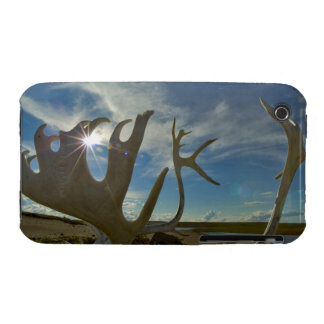 Caribou antlers on the sandy ground in the iPhone 3 Case-Mate cases