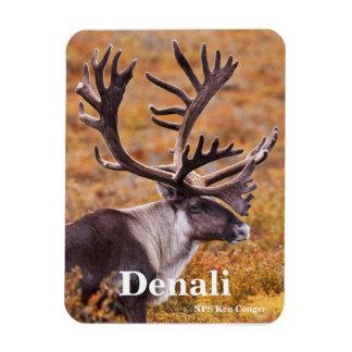 Caribou at Denali Magnet