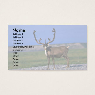 Caribou bull business card