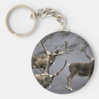 Caribou bulls in velvet keychains