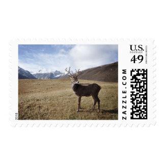 Caribou Deer Mountain Reindeer Wildlife Stamp