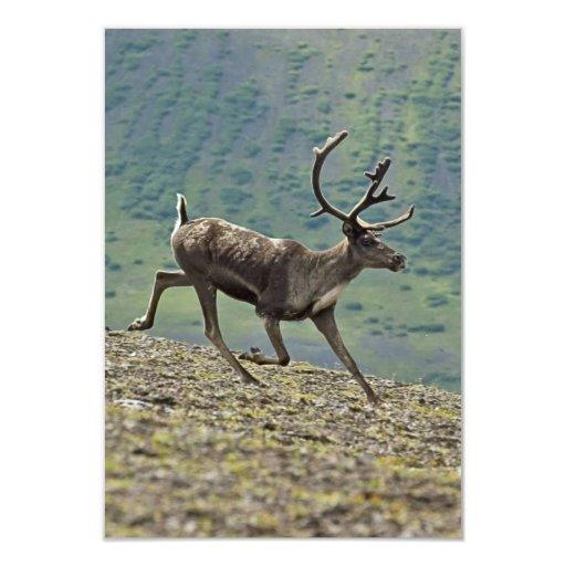 Caribou deer running on a hill in alaska 3.5x5 paper invitation card