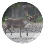 caribou dinner plates