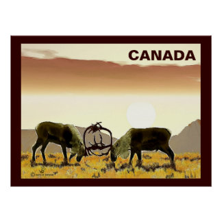 Caribou Duel - Canada Poster