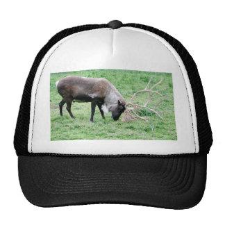 Caribou Hat
