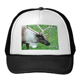 Caribou Mesh Hats
