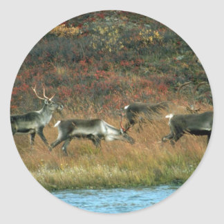Caribou herd at tundra waterhole sticker