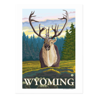 Caribou in the Wild - Wyoming Postcard