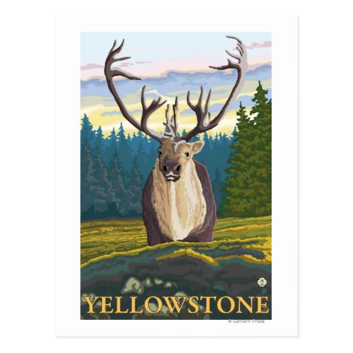 Caribou in the Wild - Yellowstone National Postcards