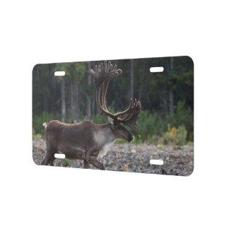 caribou license plate