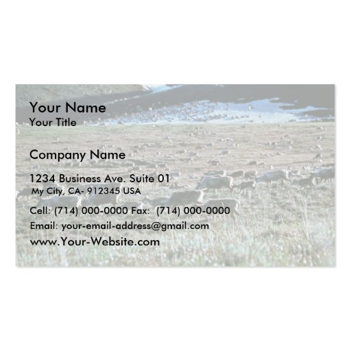 Caribou on Brooks Range, Arctic National Wildlife Double-Sided Standard Business Cards (Pack Of 100)