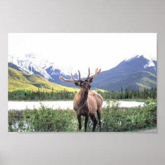 Caribou Poster