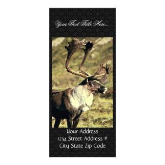 Caribou Rack Card