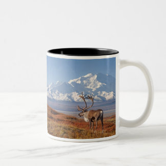 caribou, Rangifer tarandus, bull in fall colors Two-Tone Coffee Mug