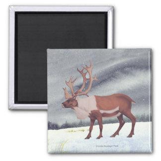 Caribou Reindeer Winter 2 Inch Square Magnet