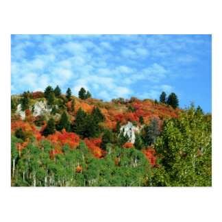 Caribou-Targhee National Forest Postcard