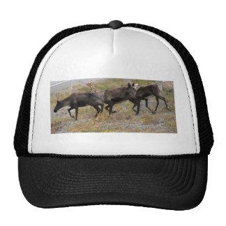 Caribou Trot Baseball Cap Mesh Hat